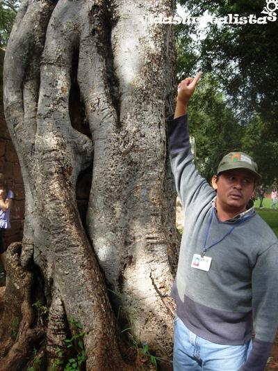 Un árbol que creció alrededor de una columna