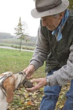 Perros entrenados para encontrar las trufas